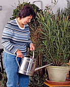 Watering container plants also in winter quarters
