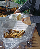 Oyster mushrooms in bag