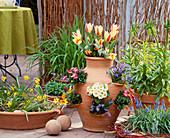 Pocket Amphora, Tulipa, Primula, Bellis, Scilla