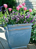 Viola wittrockiana 'Orchis' (pansy), Tulipa (tulip)