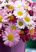 Bouquet with Agryanthemum 'Summit Pink', 'Birgit Carmine'