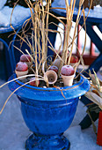Grass in blue glazed pot with apples in small clay pots