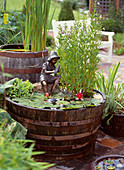 Wooden barrels with Nymphaea hybrid 'Froebelii', Mimulus ringens
