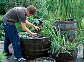 Theo fishing algae from water tub