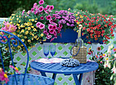 Balkonkasten mit Petunia-Hybr. 'Celebration Sun', Petunia