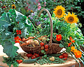 Harvest basket with carrots, tomatoes, onions, potatoes, cucumbers