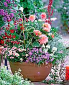 Argyranthemum, Salvia farinacea, Plectranthus, Dahlia