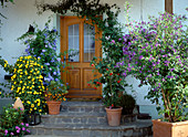 Container plants at the house entrance