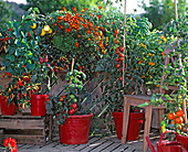 Farmhouse balcony with Capsicum 'Medusa', tomato, Tagetes 'Favorite Red',