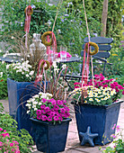 Blue pots with Verbena 'Patio Rose', 'Patio Magenta'