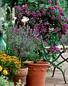Heliotropium arborescens-vanilla flower, Polyanthes tuberose, Lavandula