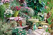 Etagere mit Argyranthemum 'Summer Melody' (rosa), 'Blanche