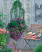 Wire basket, heliotropium, hedera, petunia