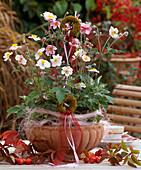 Anemone hupehensis (autumn anemone)