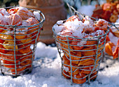 Lampion flowers in a basket with hoarfrost