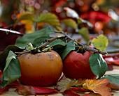 Kaki fruit (persimmon) in ripe condition