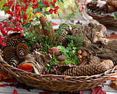 Basket with roots, cones, moss and brown caps as decoration