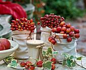 Malus (ornamental apple), rose (rosehip), hedera (Ivy)