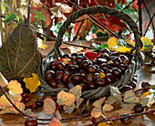 Basket with chestnuts (Aesculus)