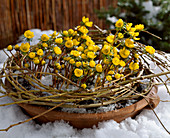 Clay bowl with Eranthis hyemalis, weeping willow wreath