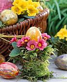 Primula acaulis (primrose) as mini with Easter eggs, color