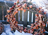 Physalis (lantern flower) wreath with hoarfrost