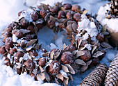 Chestnut wreath in the snow