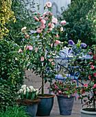 Camellia japonica 'Nuccio's Pearl', Helleborus orientalis