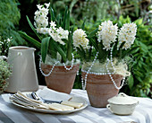 Hyacinthus orientalis 'Madame Sophie' (Hyacinth)