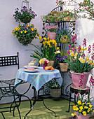 Balcony corner with corner shelf Narcissus 'Pipit', Viola
