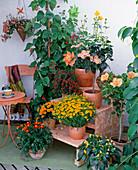Balcony corner with shelves, Tagetes tenuifolia, Impatiens