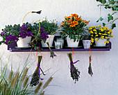 Wall shelf with Gazania F1 Sunshine Mixture, Argyranthemum