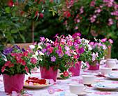 Table decoration with Petunia milliflora 'Fantasy Formula Mix'