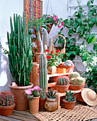 Cacti and succulents, from left-Ferocactus gracilis, Euphorbia
