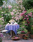 Terrasse mit Syringa, Clematis-Hybr. 'Pink Champagne',
