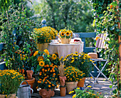 Balcony with Helianthus (sunflower), Tagetes (marigold)