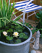 Tin pan with Nymphaea Alba