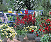 Terrace with annual, Petunia grandiflora 'Prism Sunshine'