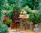 Balcony with Mediterranean flair-pineapple mint