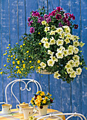 Flower basket, Petunia grandiflora 'Prism Sunshine'