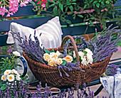 Basket of freshly cut lavandula (lavender)