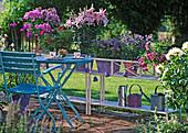 Flower pots with single pots, Phlox arendsii 'Purple Star'