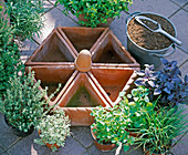 Plant round of triangular clay pots with herbs