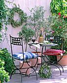 Olea europaea (olive trees)