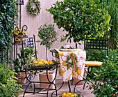 Mediterranean flair, Citrus mitis (Calamondin orange)
