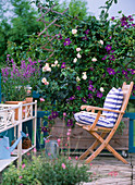 Screen on balcony with climbing rose 'New Dawn'