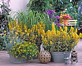 Perennials arrangement
