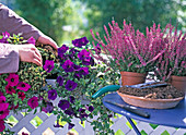 Swap dead flowers in late summer