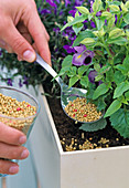Plant box with water reservoir