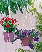 Ceiling mount for hanging baskets